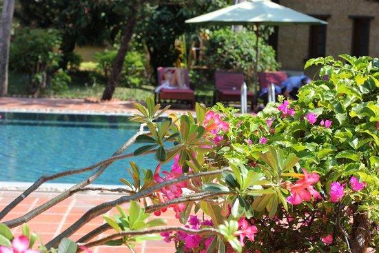 Little Mui Ne Cottages: Большой бассейн