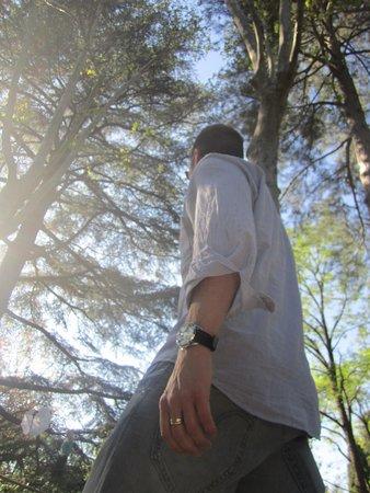 Parque de El Capricho: Arboles