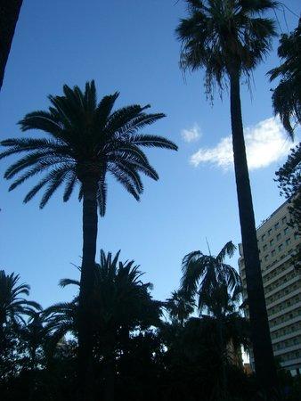 Parque de Málaga: PALM TREES