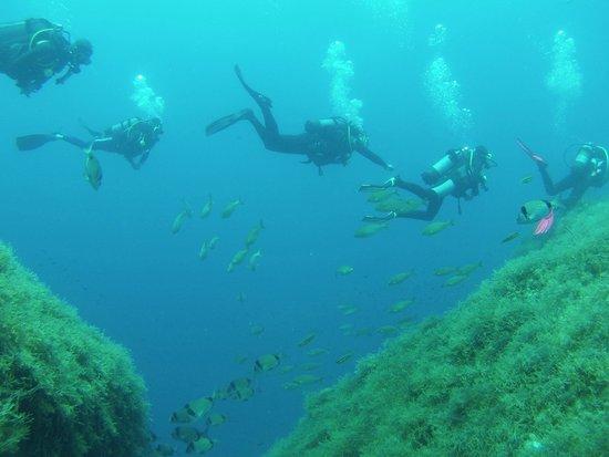 Bezz Diving Centre: Buddies?