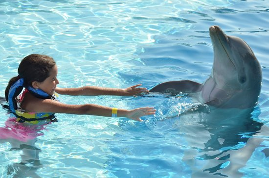 Grand Sirenis Riviera Maya Resort & Spa: Excelente Delphinario