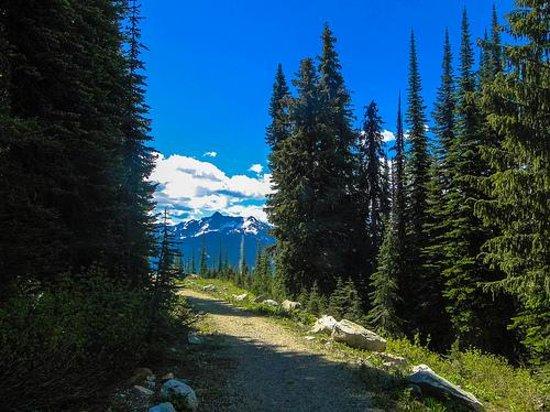 Mount Revelstoke National Park: que paz!