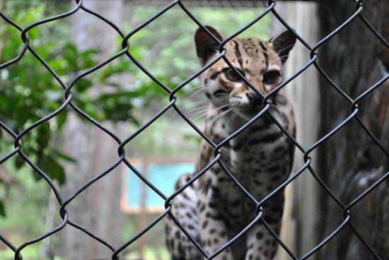 Club Rio Outdoor Center: beautiful cats