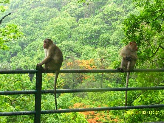 Elephanta Caves: Monkeys at the Caves