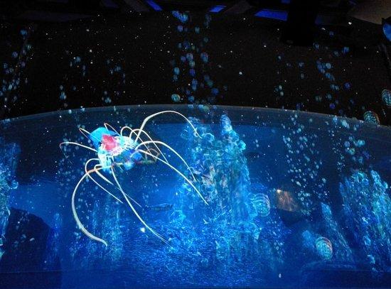 Enoshima Aquarium : 大水槽ナイトアクアリウム1