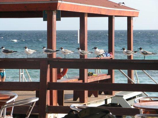 De Palm Island: Vista da área de mergulho.