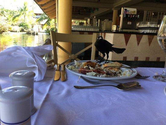 Iberostar Bavaro Suites: Похититель еды