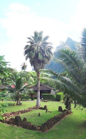 Village Temanoha : Jardin