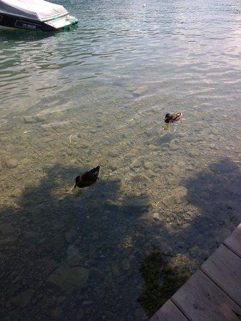 Chez Ma Cousine: la compagnie des canards