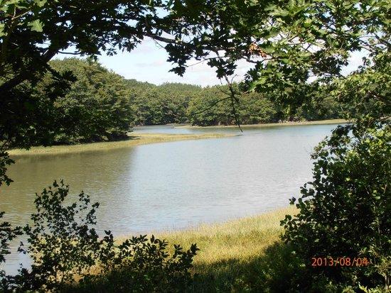 Shore Hills Campground: Vue sur la baie