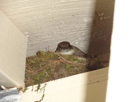 Bartlett Inn: Cute little momma bird on her nest under the eve