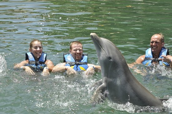 Dolphin Discovery Puerto Aventuras: watching dolphin tricks