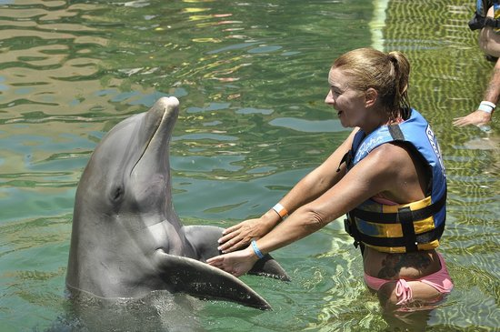 Dolphin Discovery Puerto Aventuras: shaking hands