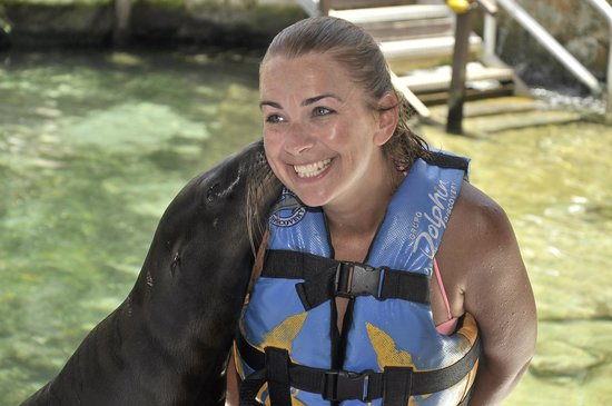 Dolphin Discovery Puerto Aventuras: kissed by sea lion