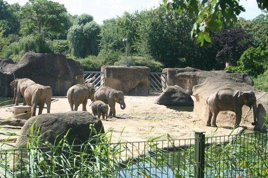 Kölner Zoo: Elpahnt Area with Babies
