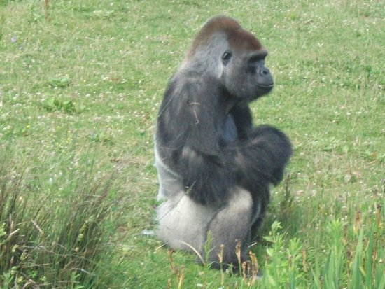 Zoo de la Palmyre : oh! un singe qui boude!!