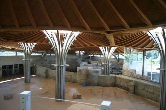 Kölner Zoo: Interior of Elephant Building