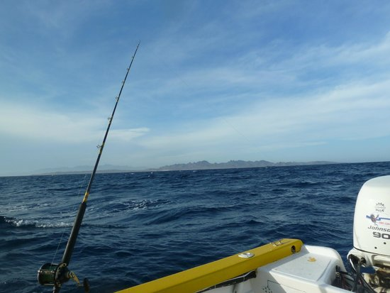 Tailhunter International Sportfishing: Trolling live bait