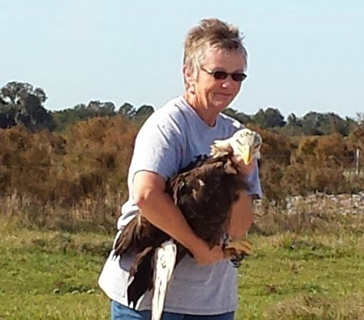 Save Our Seabirds: Beth Releasing Bald Eagle
