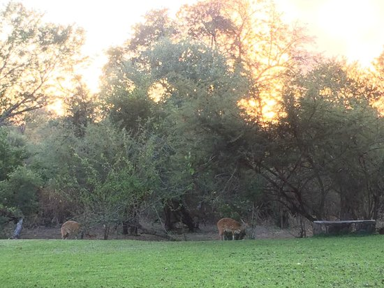 Ilala Lodge: Impalas in the garden