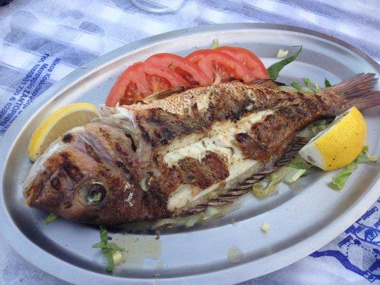 Irinis Taverna: Sea bream, called red snapper