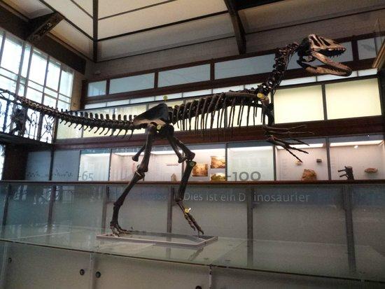 Museo de Ciencias Naturales: Museu de Ciências Naturais - réplica da ossada de dinossauro