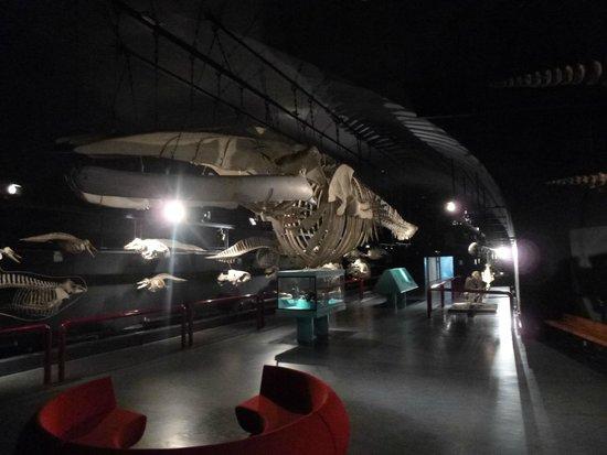 Museo de Ciencias Naturales: Museu de Ciências Naturais - Sala das Baleias