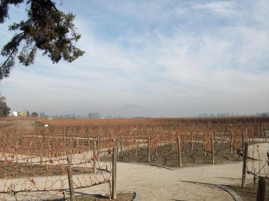 Concha & Toro: Small area of vineyards