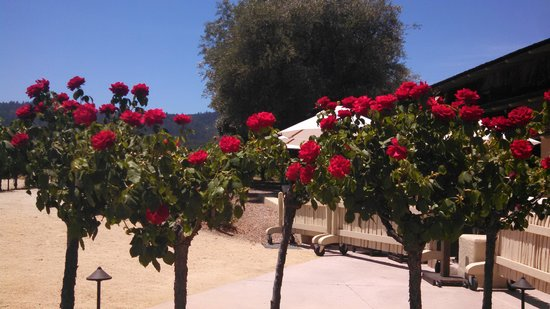 Robert Mondavi Winery: Gorgeous roses on the property