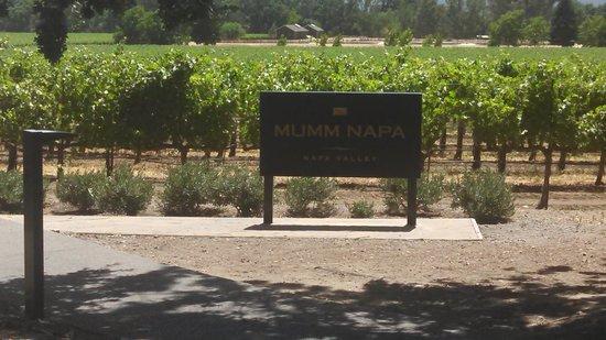 Mumm Napa: Sign and vineyard