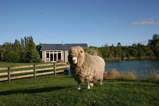 Boathouse Row: Your closest neighbour - Popcorn the sheep