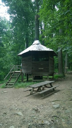 Maple Tree Campground: tree house