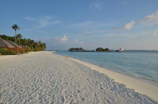 Veligandu Island Resort & Spa: Beach, early evening