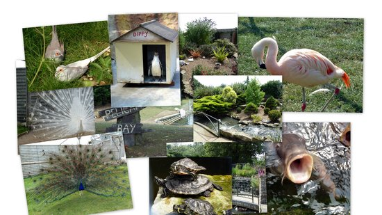 Seaview Wildlife Encounter: Taster collage!