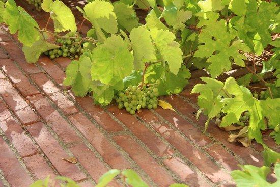 Le Meridien Ra Beach Hotel & Spa: Виноград в саду в отеле