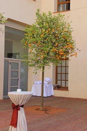 Le Meridien Ra Beach Hotel & Spa: Апельсиновое дерево