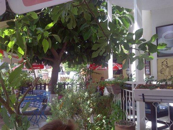 Dalyan Iz Cafe : iz cafe