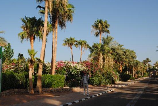 Domina Hotel & Resort Harem: Территория отеля 1