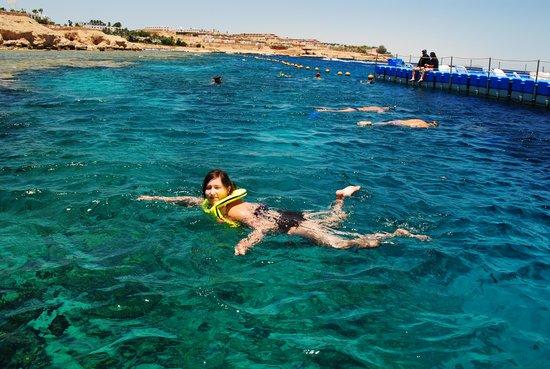 Domina Hotel & Resort Harem: Прекрасный пляж с понтонами!