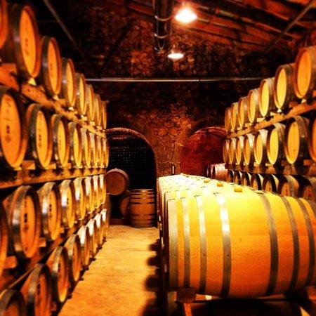 Mallorca Wine Tours: Mallorca Wine Tour