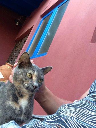 La Maison Aruba: Meow