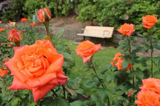 International Rose Test Garden: Roses