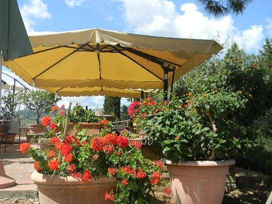 "Chianti Wine Tour : Had ""al Fresco"" wine tasting and snacks"
