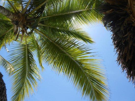 Tropical Princess Beach Resort & Spa : allongé à la pisine