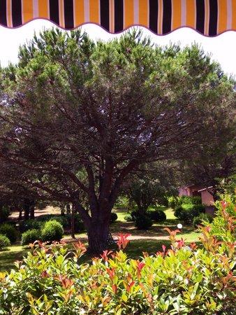 Les Pins de Santa Giulia : vue depuis la terrasse