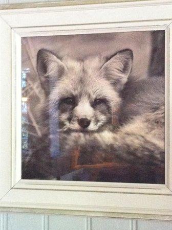 The Stretton Fox: Foxy foxes at the Fox!