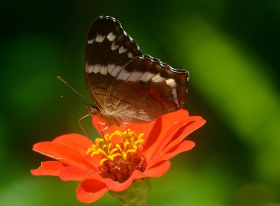 Saladero Eco Lodge: butterfly