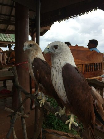 JW Marriott Phuket Resort & Spa: Two Sea Eagles at muslim fishing village Koh Panyee