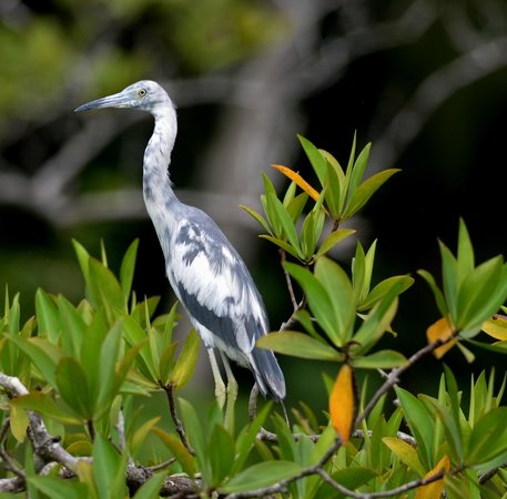 Saladero Eco Lodge: heron