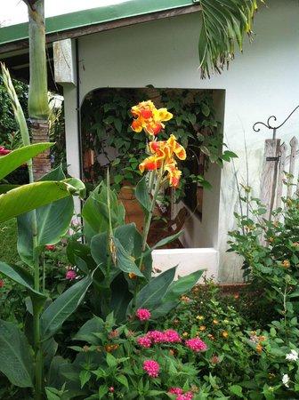 Hotel La Rosa de America: Flowers